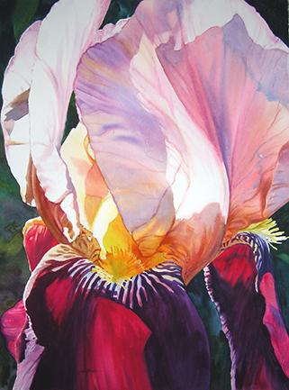 PEMBER-A-Irresistible-Iris.-jpg